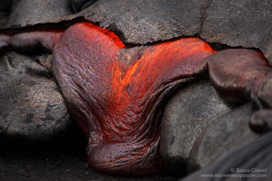 Bleeding Heart by Bruce Omori on 500px.com