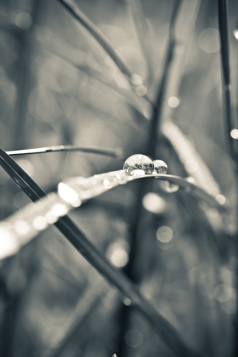 Photograph Another drop by Robin Dahling on 500px