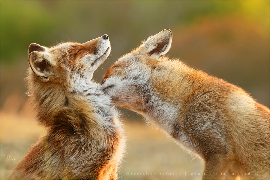 Love Bite by Roeselien Raimond on 500px.com