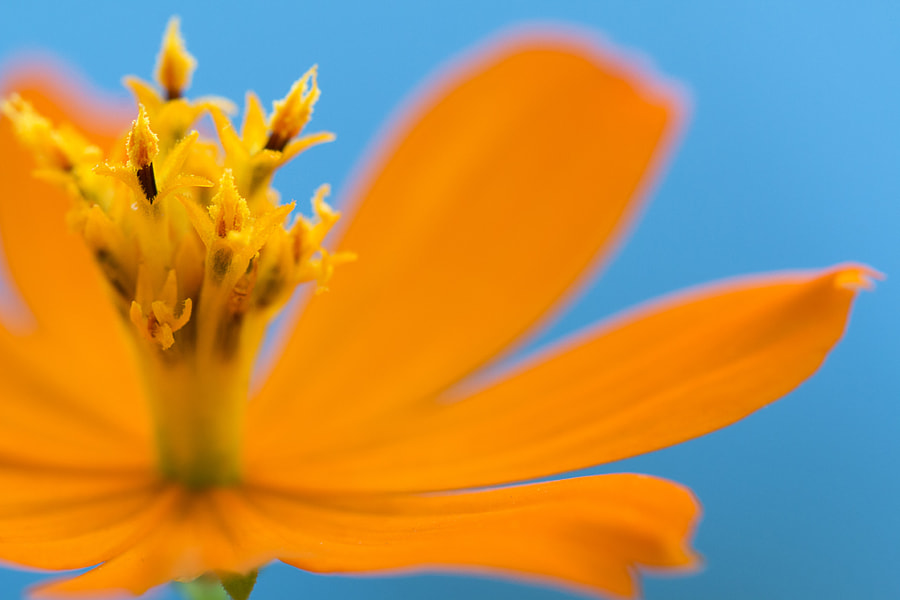 Photograph Cosmos by Julia Carvalho on 500px