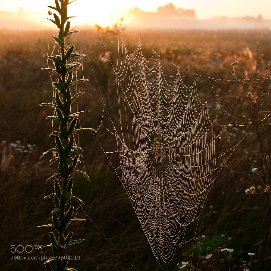 Photograph Untitled by Maksym Kvitkov on 500px