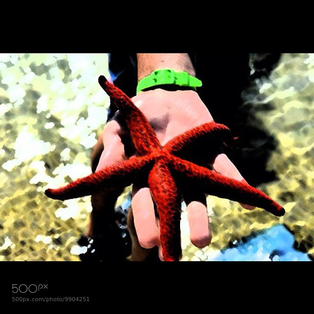 Photograph seastar by Tiziano Rigo on 500px