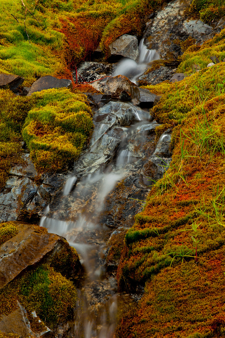 Photograph Mossy Stream by Gary Kuiken on 500px