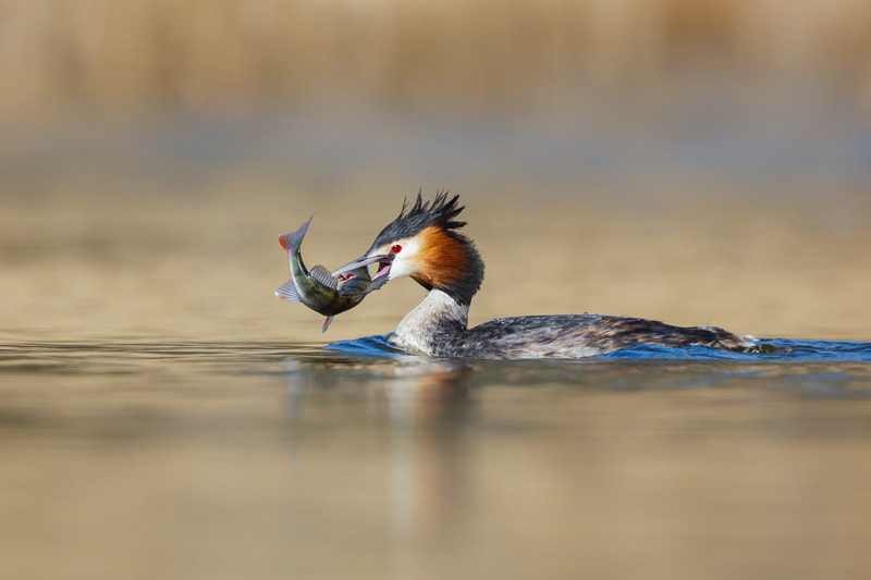 Catch of the Day by Pim Leijen on 500px.com