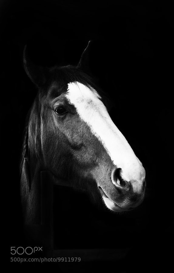 Photograph Horse v2 by Landon Hill on 500px