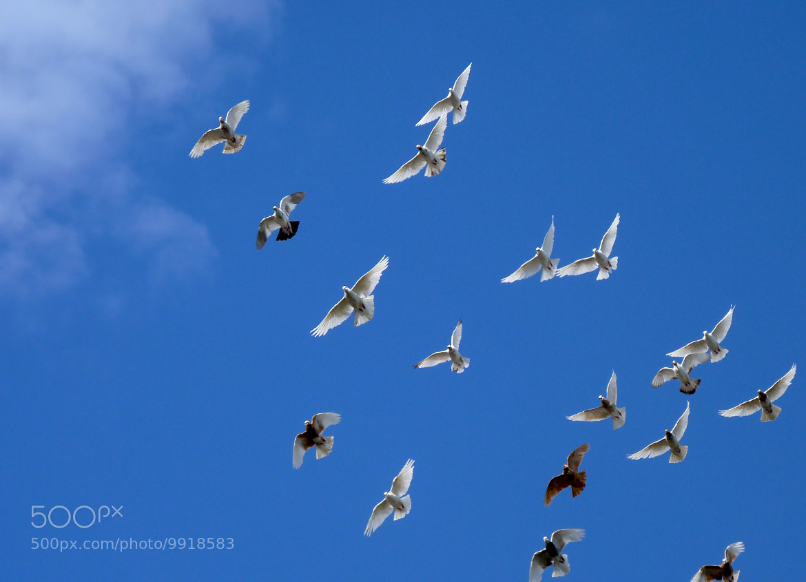 Photograph Doves of peace by Danila Smit on 500px