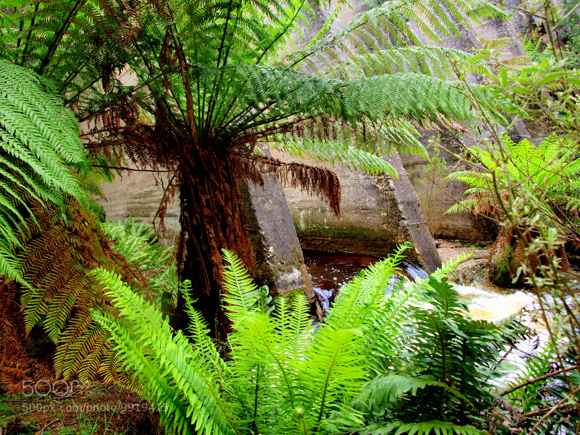 Photograph Tree Ferns by di  northey on 500px