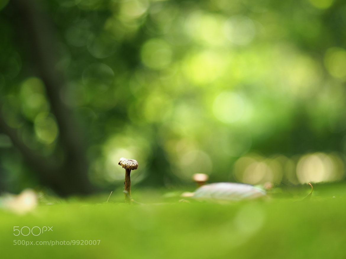 Photograph In the forest by Kaz Watanabe on 500px