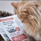 Постер, плакат: Cat ching Up on the News