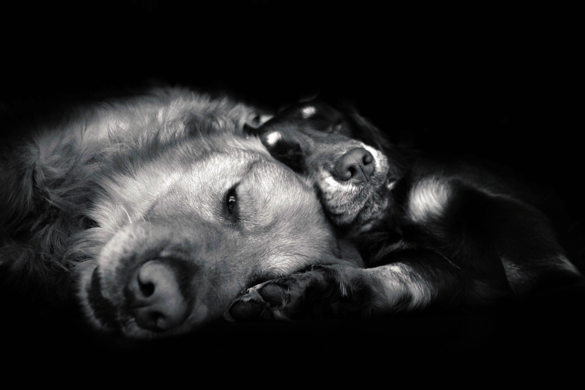 Photograph my puppies by Jessica Trinh on 500px