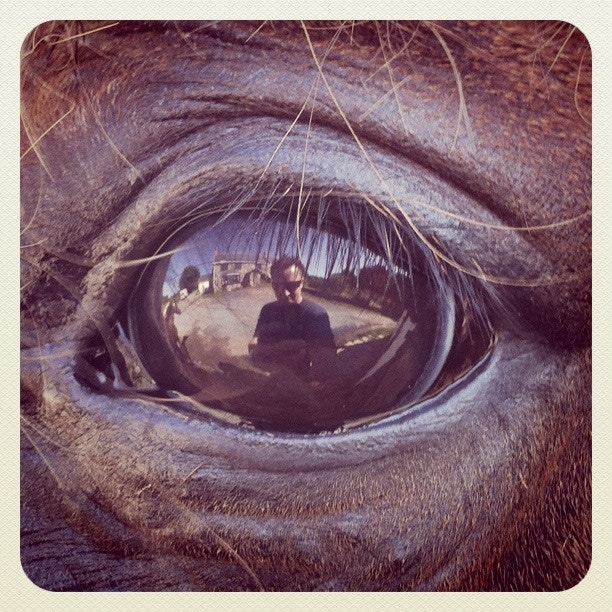 Photograph In the eye of the pony by Keri Beal on 500px