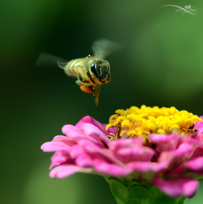 Photograph Fly Fly Fly by Mohan Duwal on 500px