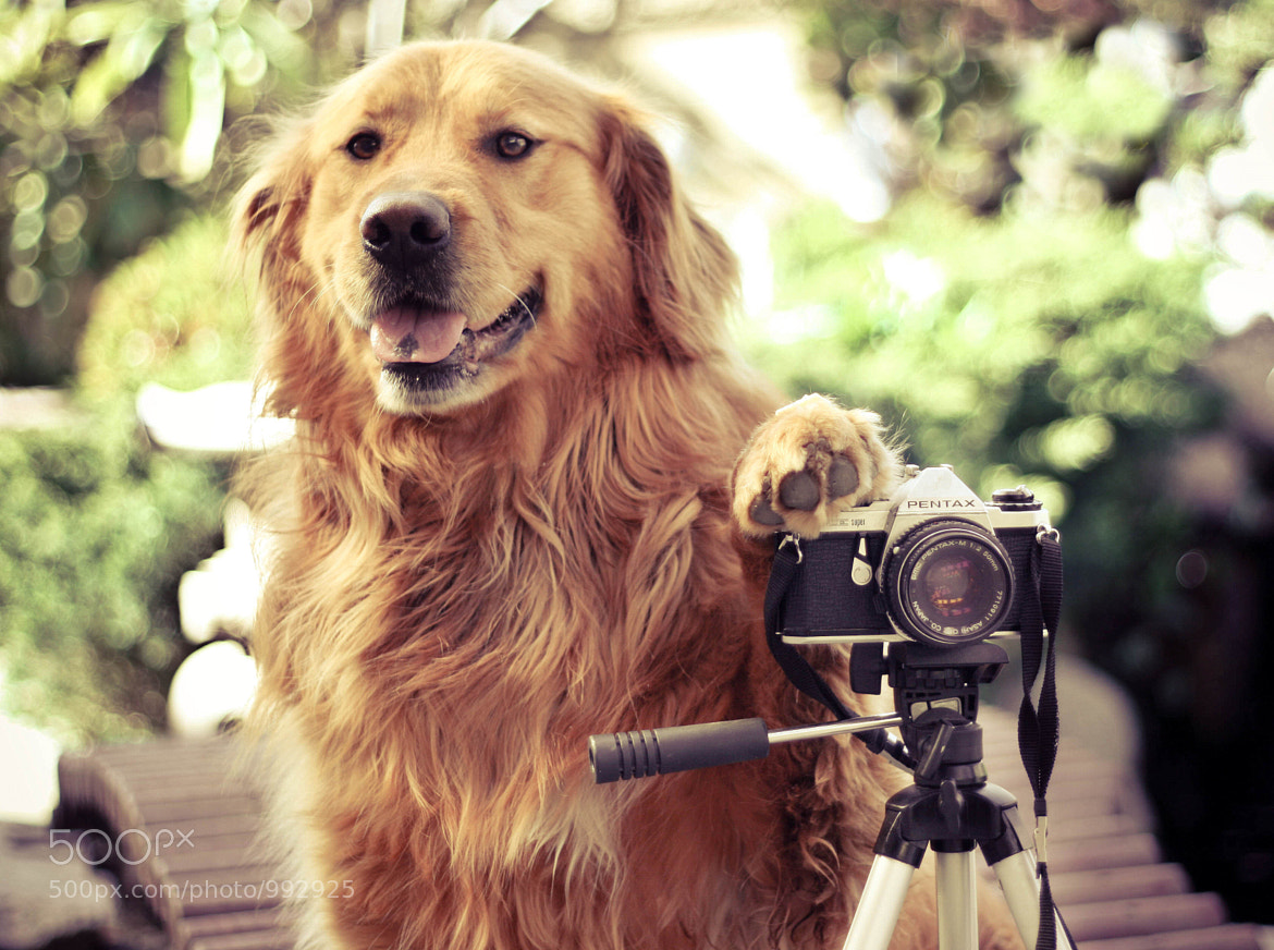 Photograph It's his turn by Jessica Trinh on 500px