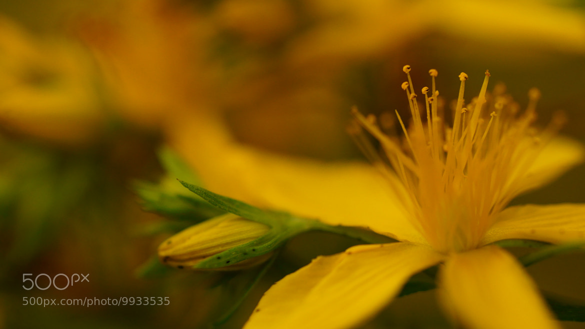 Photograph yellow X yellow by Mohammed Abdo on 500px