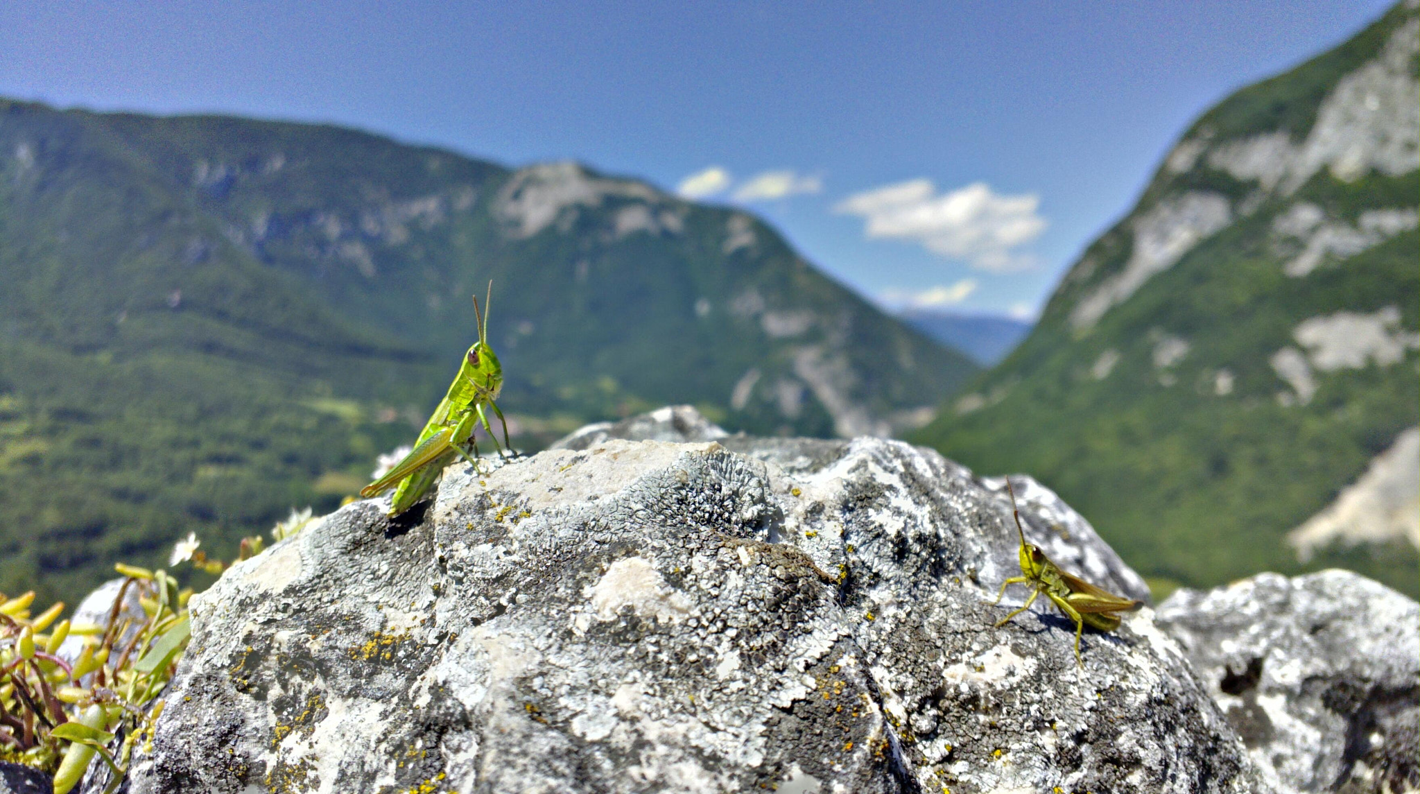 Photograph Grasshoppers in the mountains by Jouni Elomaa on 500px