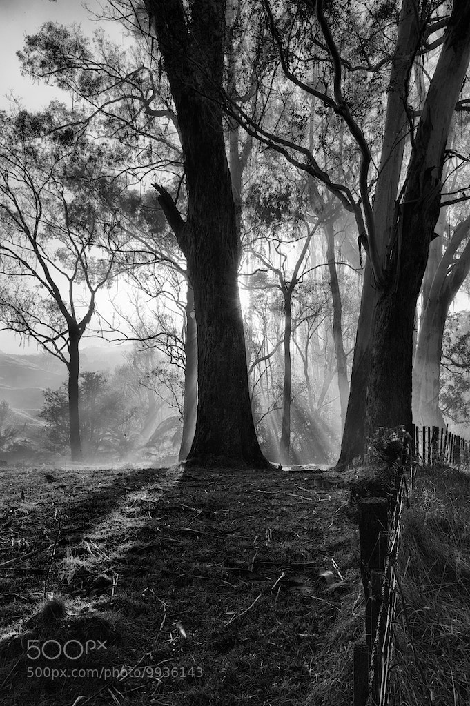 Photograph Misty Mornings by Jason Howe on 500px