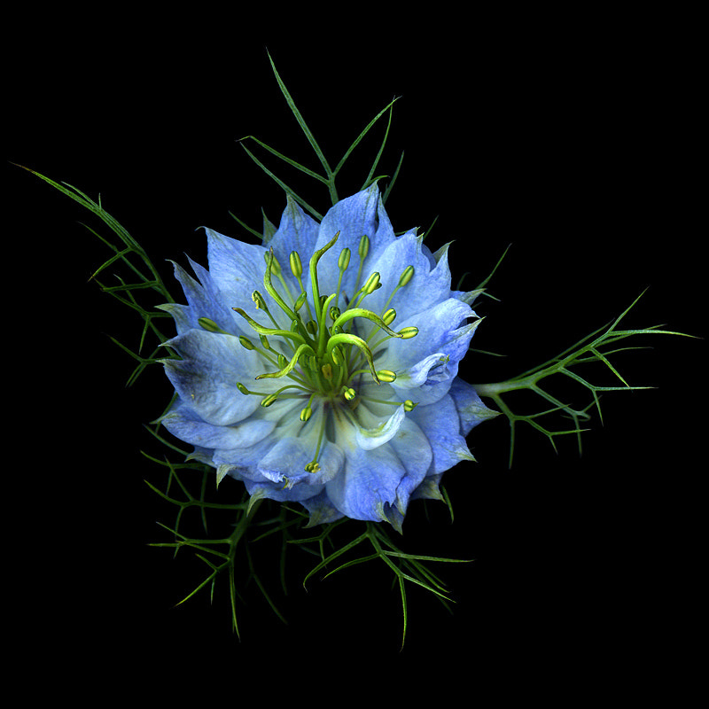 Photograph SIMPLY NIGELLA...WITH BLUE SKIRT... by Magda Indigo on 500px