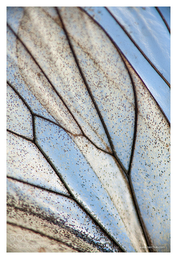 Photograph Stain-glass by Andrey Narchuk on 500px