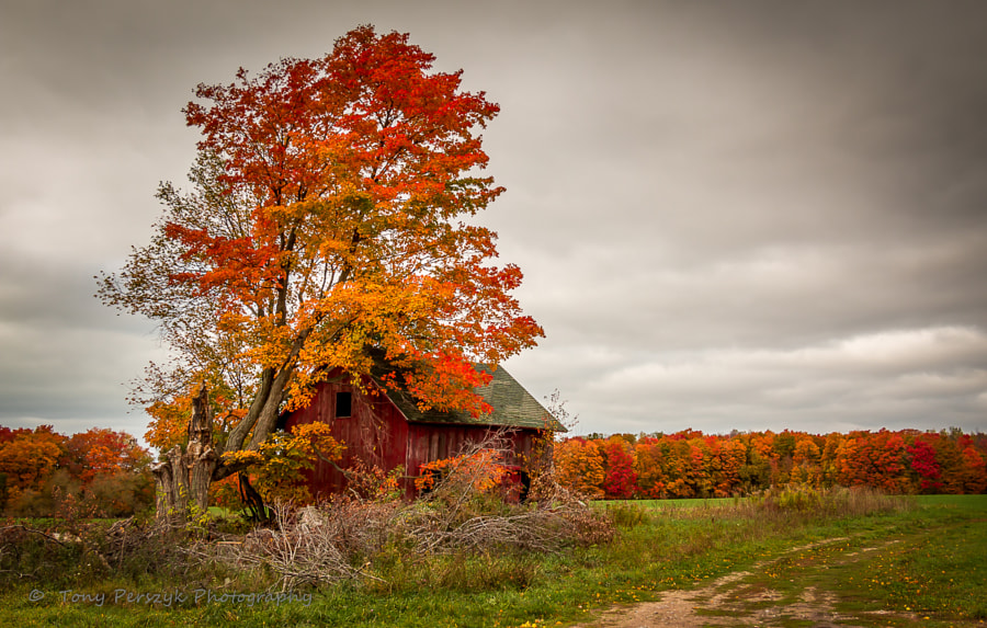 Photograph Old Shed and Tree Stony Lake Area by Tony Perszyk on 500px