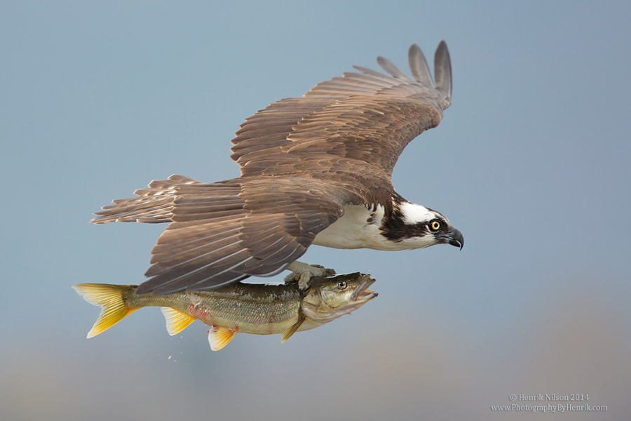 Hey, How About Some Help Here?? by Henrik Nilsson on 500px.com