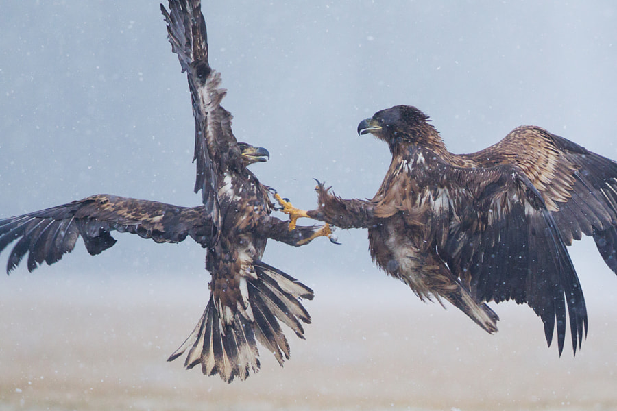 Juveniles' fight by Sylwia Domaradzka on 500px.com