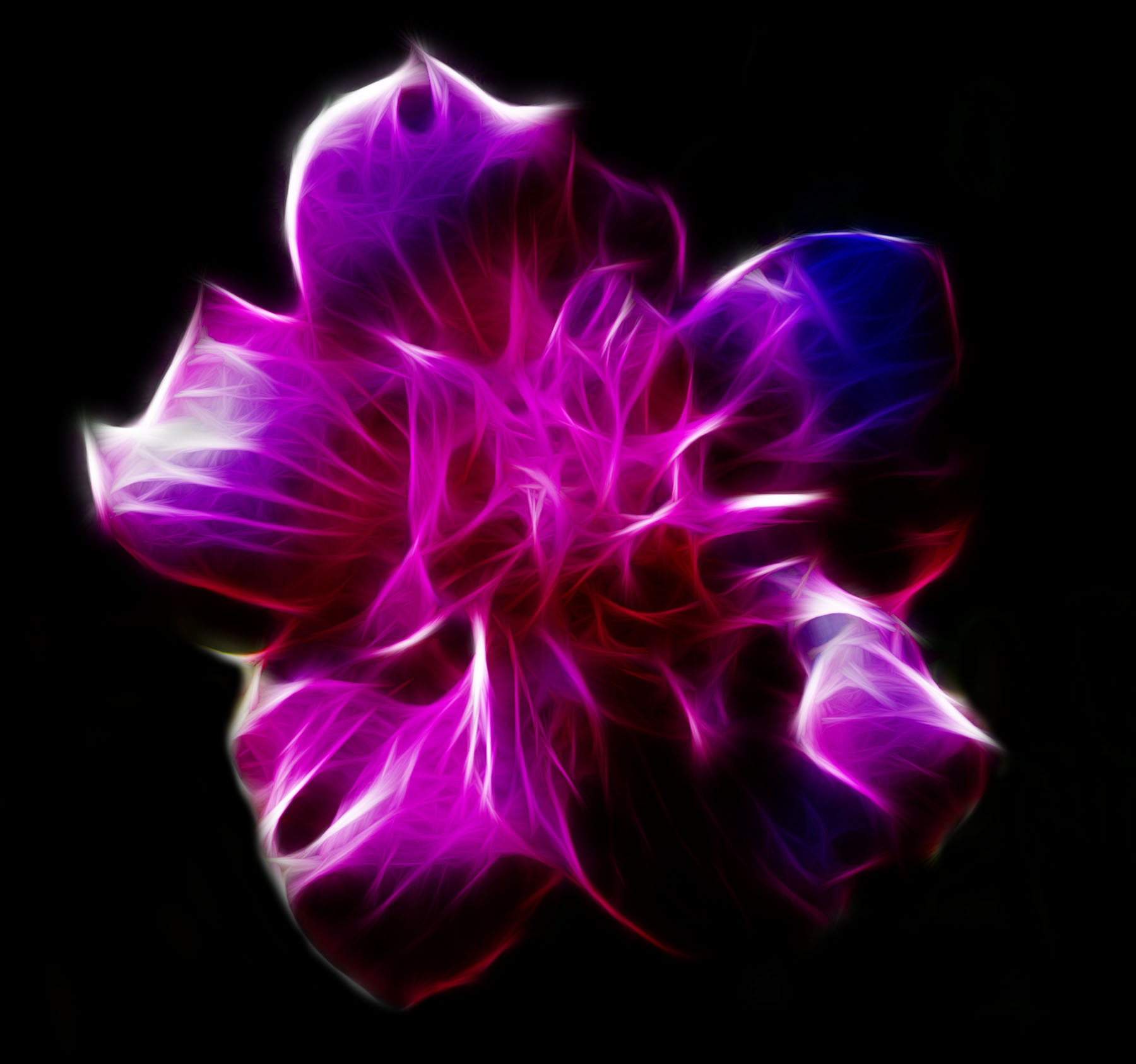 Photograph Fractal Flower by Jennifer Williams on 500px
