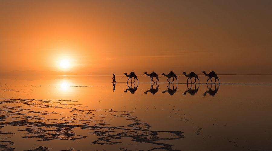 Caravan (Ethiopia) by Victoria Rogotneva on 500px.com