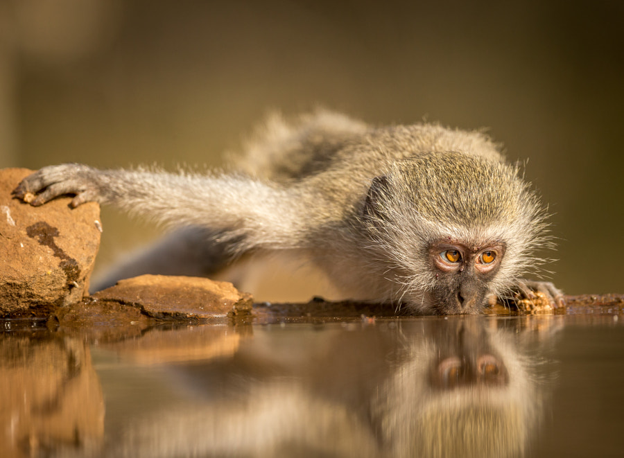 Photograph Monkey business by Jaco Marx on 500px