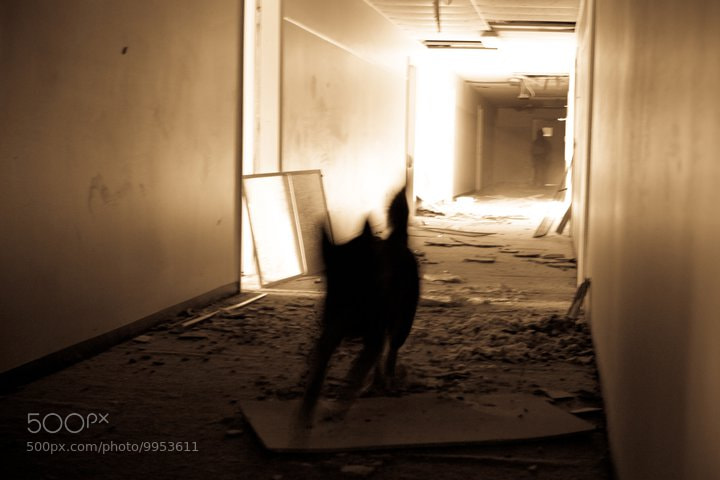 Photograph Ghost dog by Scott Nolen on 500px