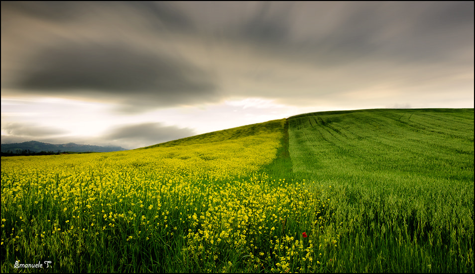 Photograph Yellow vs. Green by Emanuele Torrisi on 500px