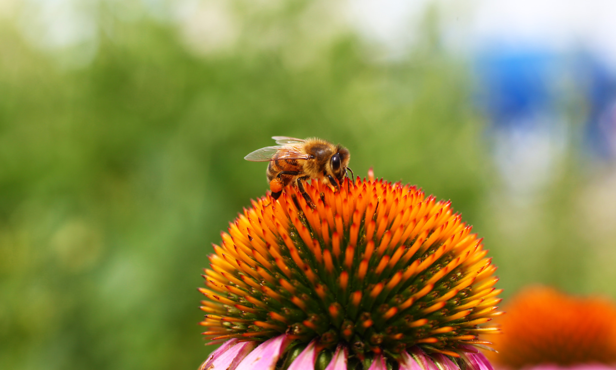 Photograph Bumble Bee on a Flower by Yana Bukharova on 500px
