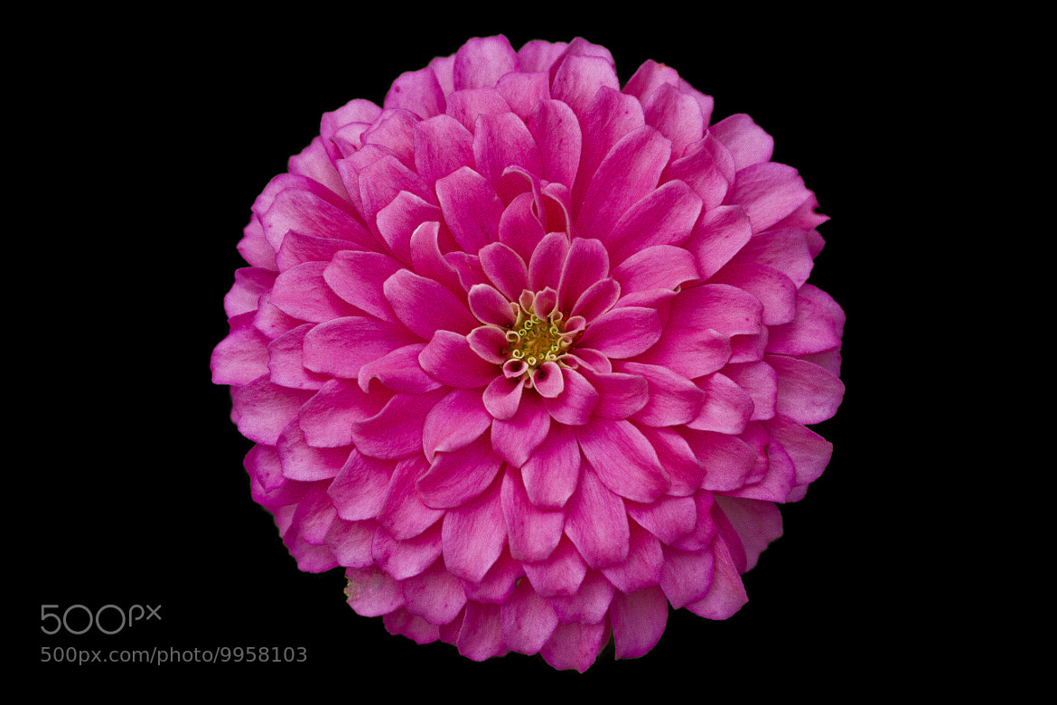 Photograph PRETTY IN PINK by John Mead on 500px