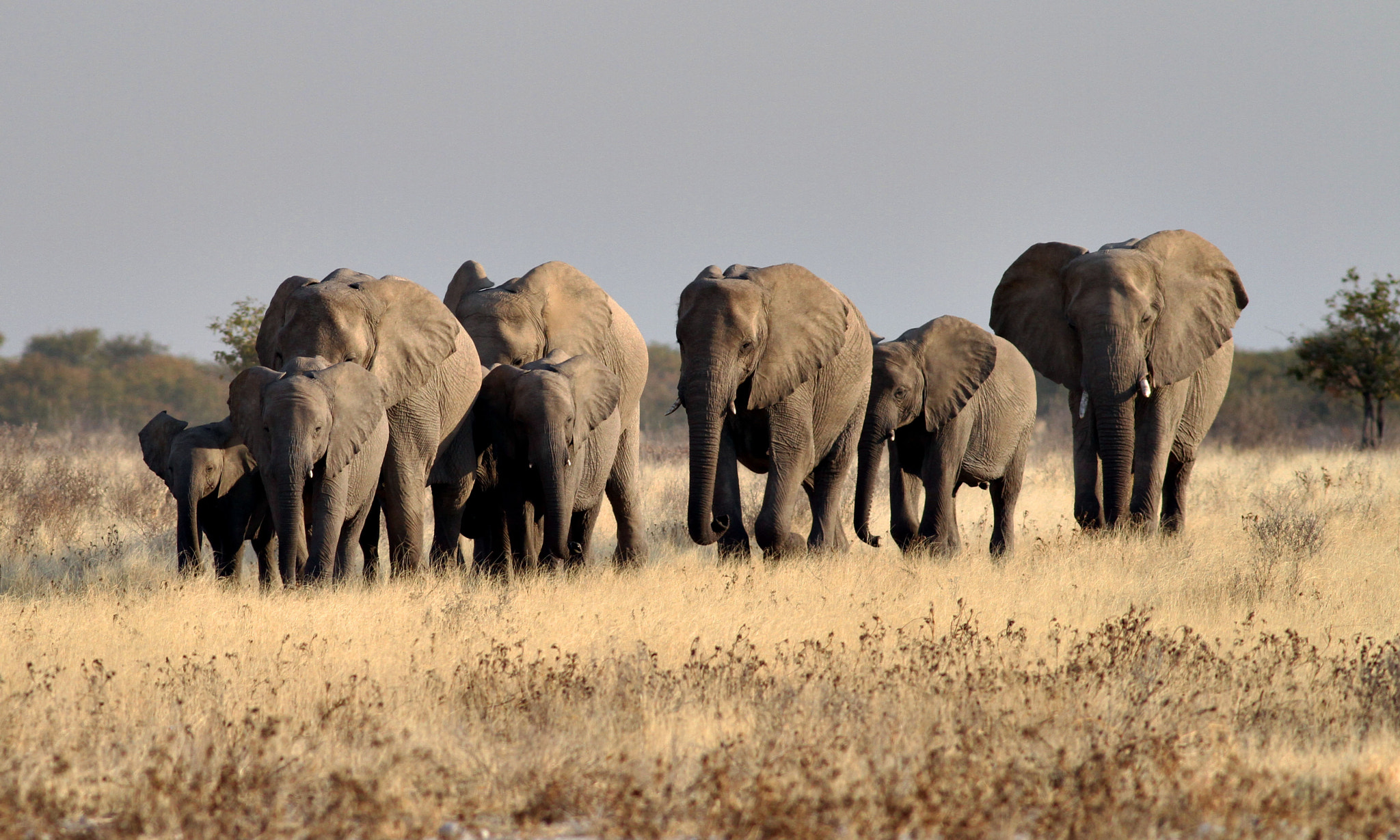 Photograph Ivory route by Ajay Bhoopchand on 500px