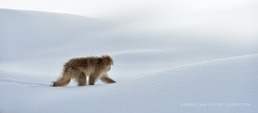 Photograph Pristine by Marsel van Oosten on 500px