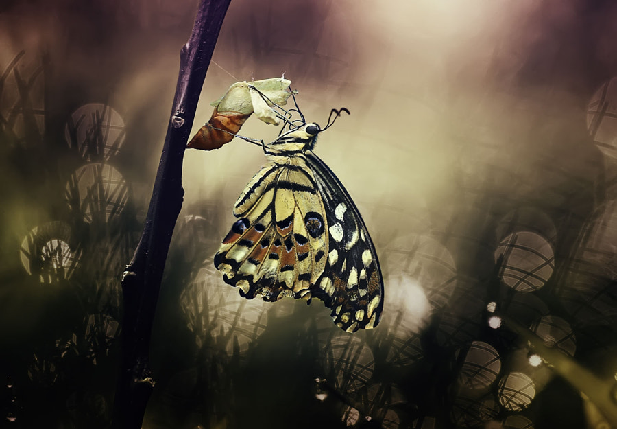 Photograph Young butterfly by YOline SAntosa on 500px