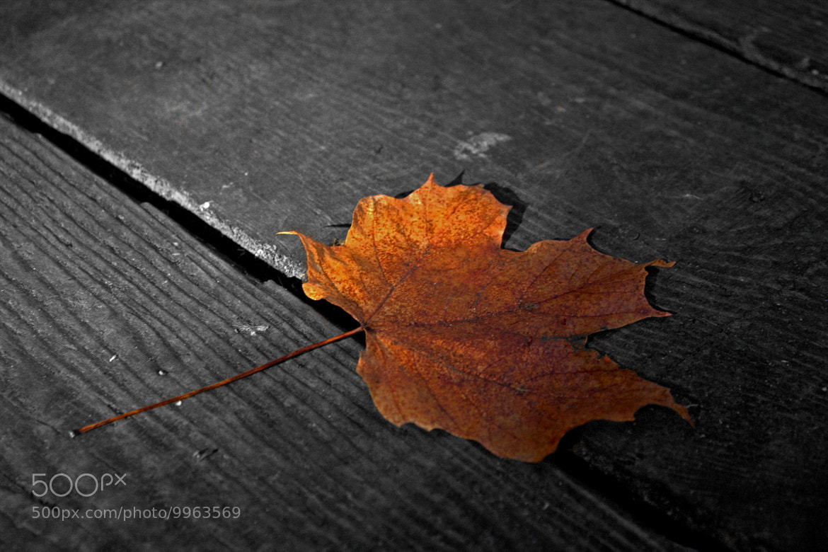 Photograph Autumn leaf by Yan Bellerose on 500px