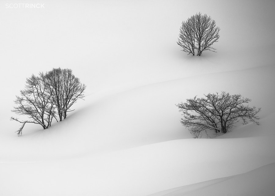 Photograph Three Japanese Trees in Snow by Scott  Rinckenberger on 500px