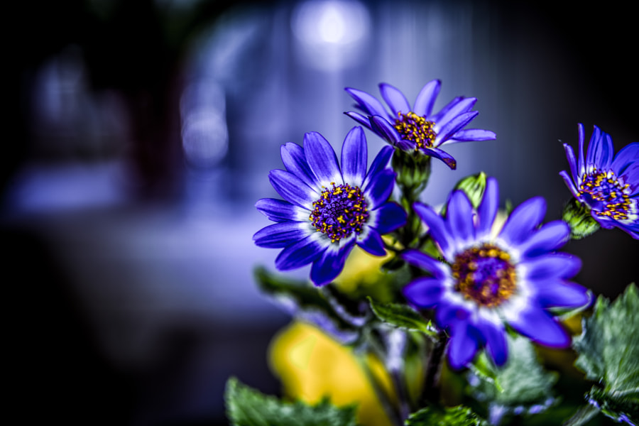 Photograph Flowers by Thomas  on 500px