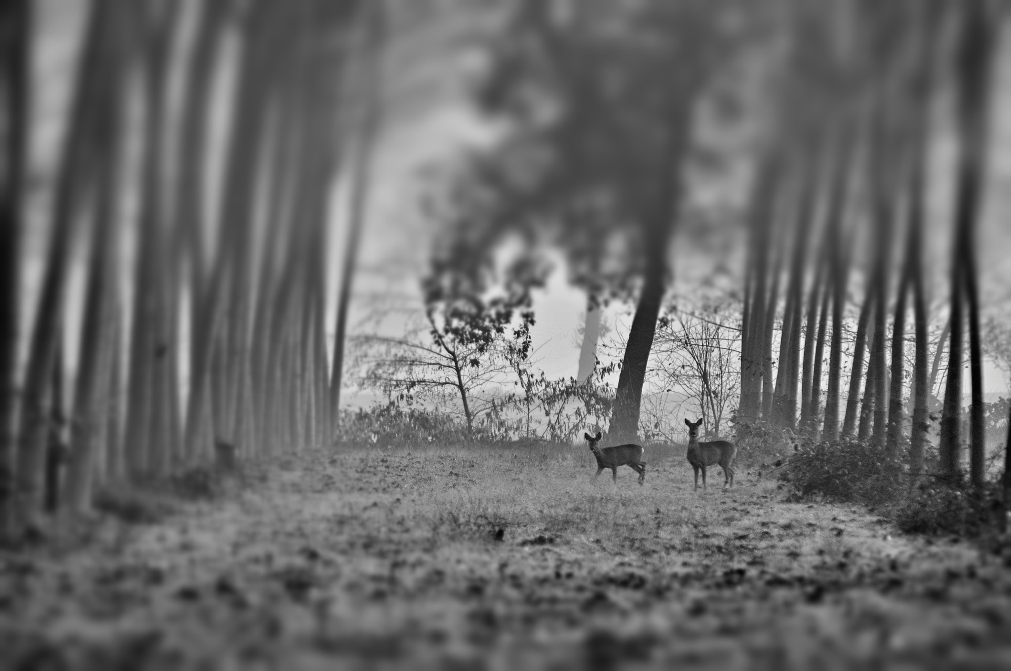 Photograph deers in the fog by Riccardo Alù on 500px