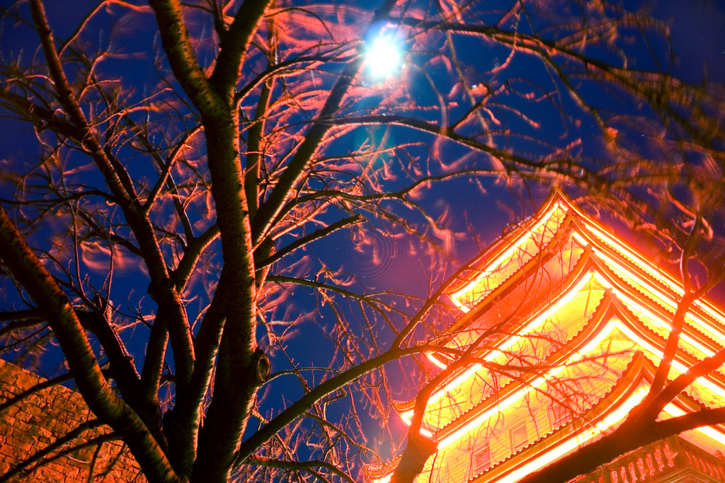 Photograph Pagoda by Night by Liam Johnson on 500px