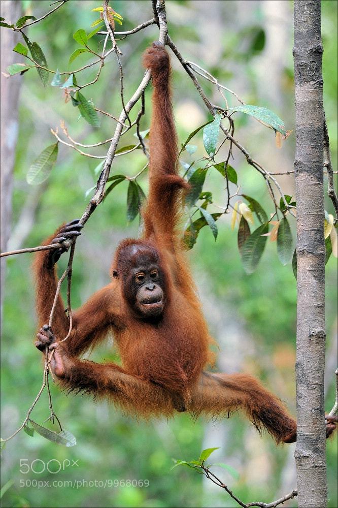 Photograph Orang Utan Child by Elmar Weiss on 500px