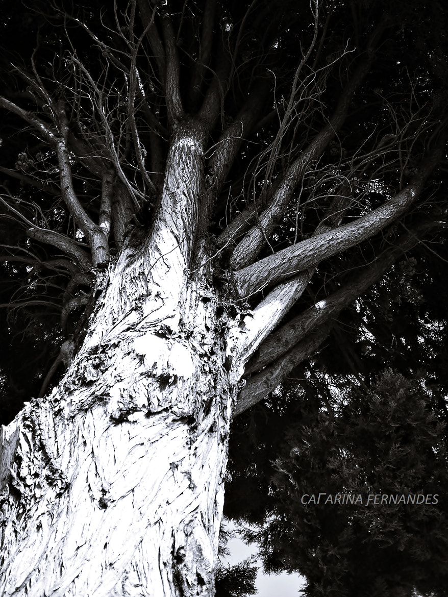 Photograph Dark Tree by Catarina Fernandes on 500px