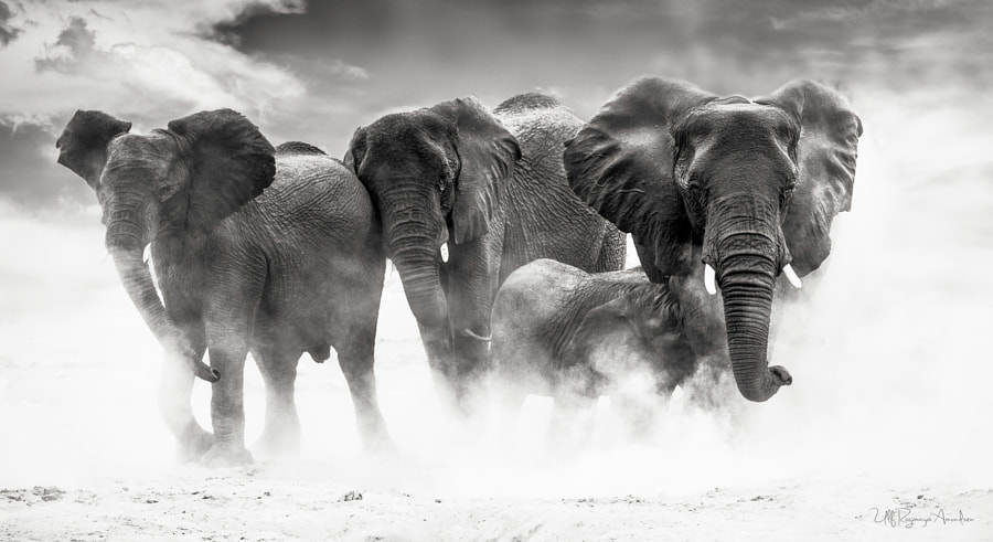 Etosha by Ulf Amundsen on 500px