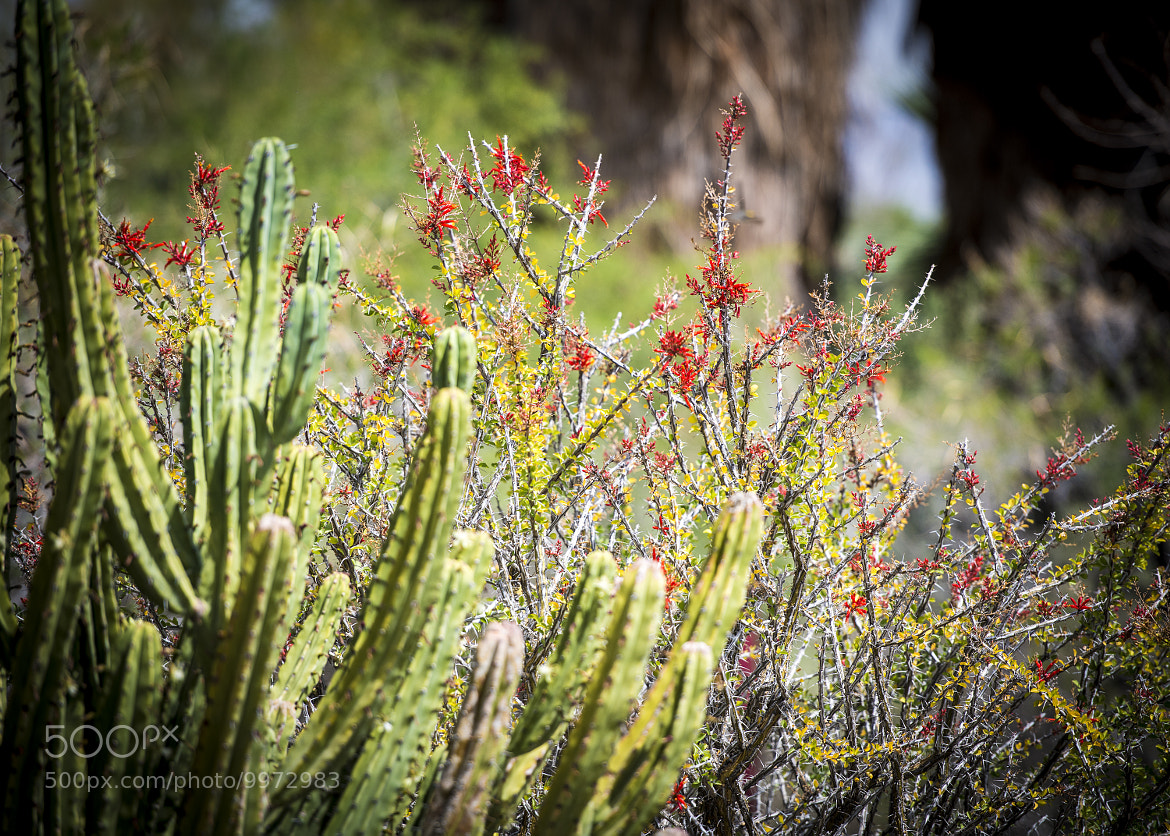 Photograph Palm Springs Desert 9 by Richard Harrington on 500px
