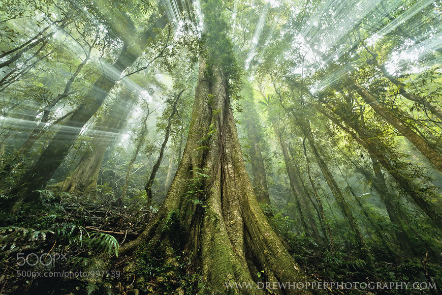 Photograph Mystic Jungle by Drew Hopper on 500px