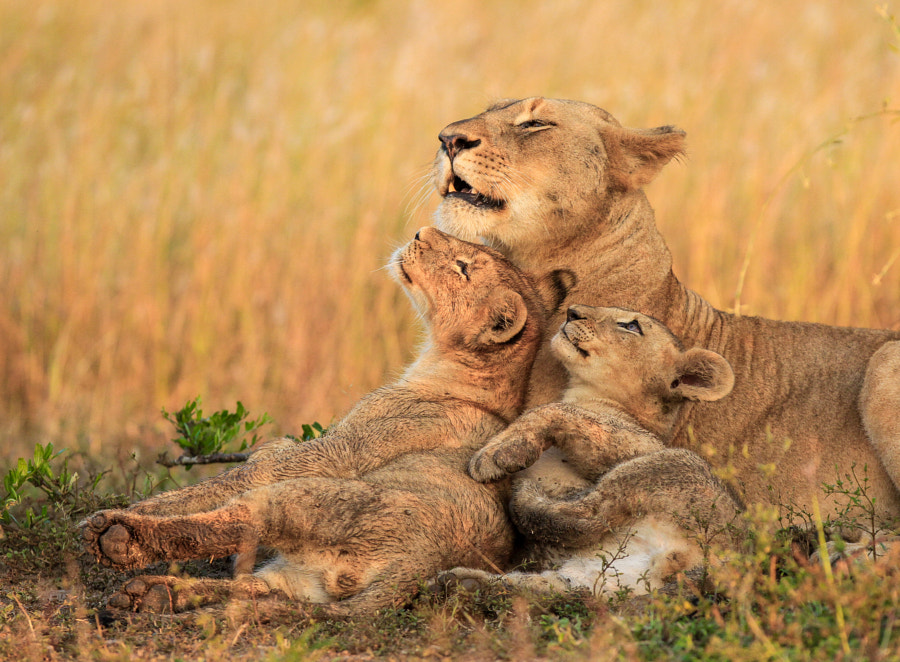 A Proud Mother by Jaco Marx on 500px.com