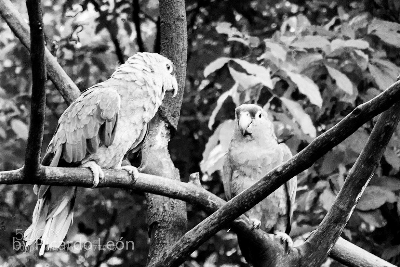Photograph *** by Ricardo Leon on 500px