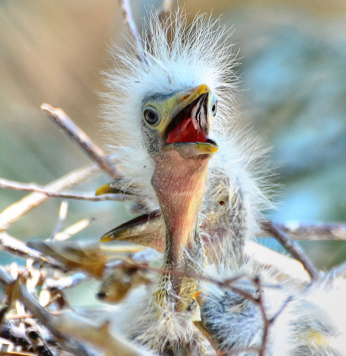 Photograph Long Neck Big Hair by Jeff Clow on 500px