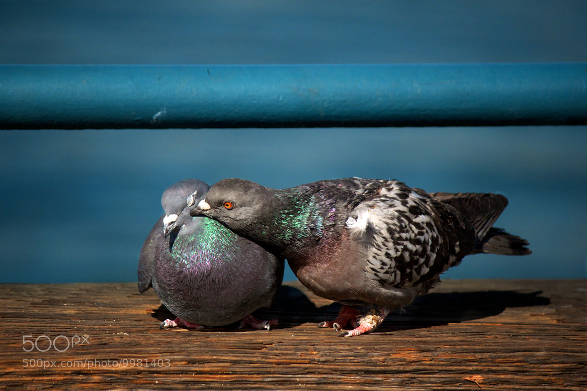 Photograph Kiss by Jesus Laboy on 500px