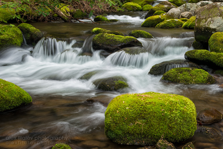 Photograph Appalachian Stream by Alex Filatov | alexfilatovphoto.com on 500px